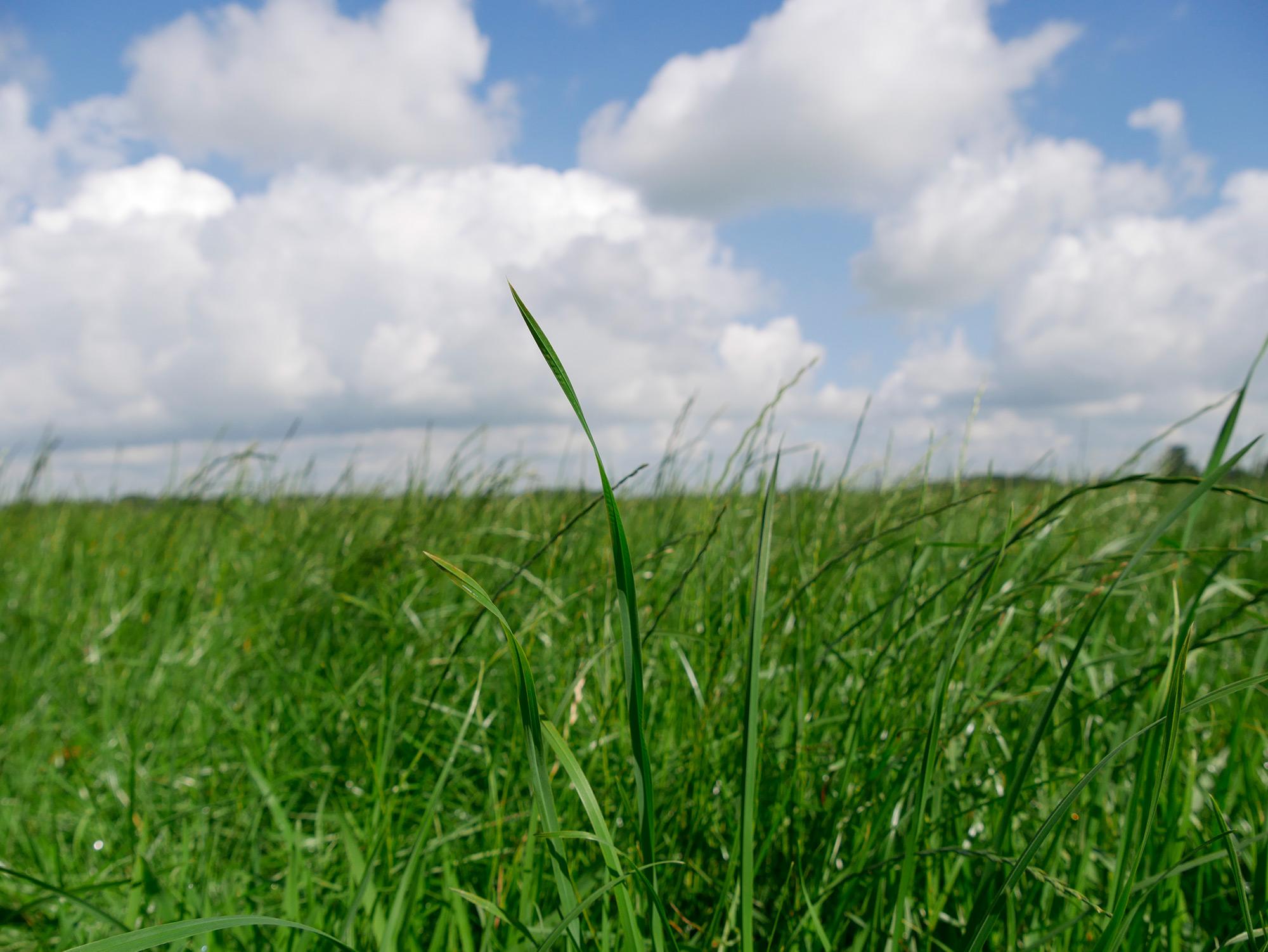 Tips voor inkuilen gras 2021